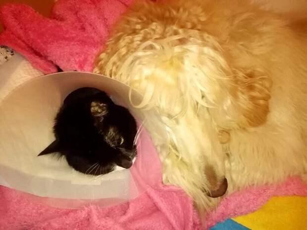 Как наша собака спасла котенка