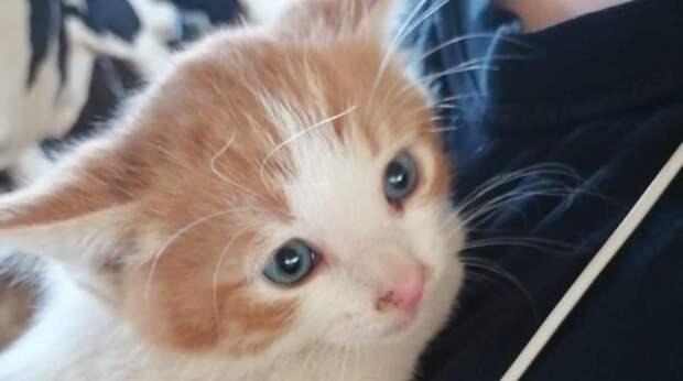 Котенок еще не умел ходить, поэтому полз навстречу понравившемуся ему человеку…