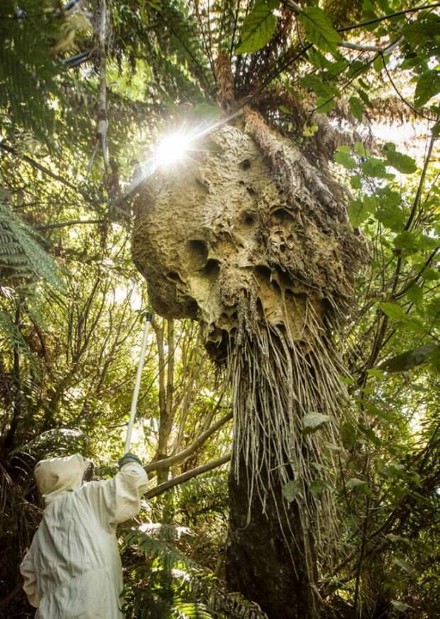 20 творений природы, способных вызвать ужас даже учеловека скрепкой психикой