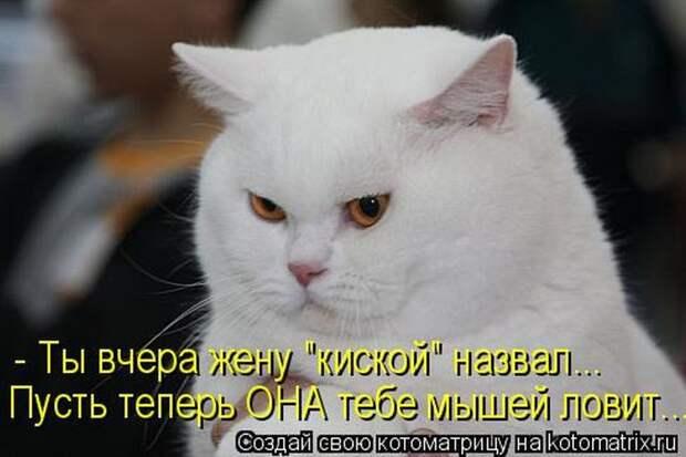 Лучшие котоматрицы недели животные, картинки