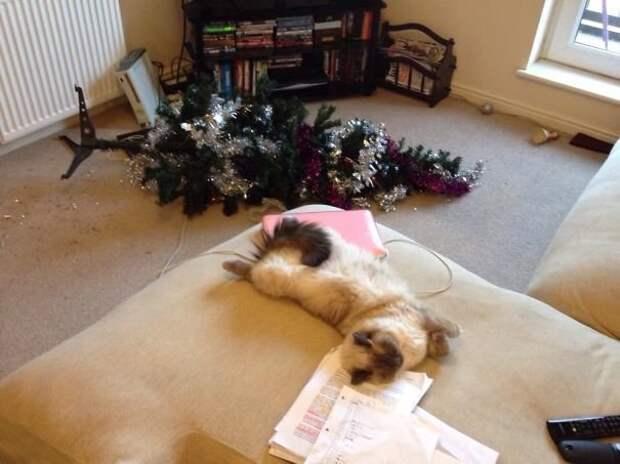 25. С елкой разобрался, теперь можно и вздремнуть животные, новый год, праздник к нам приходит, разрушительная сила, рождество, собаки и кошки, юмор
