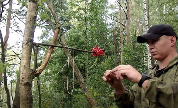 Добываем еду в чаще леса: советы лесников и охотников