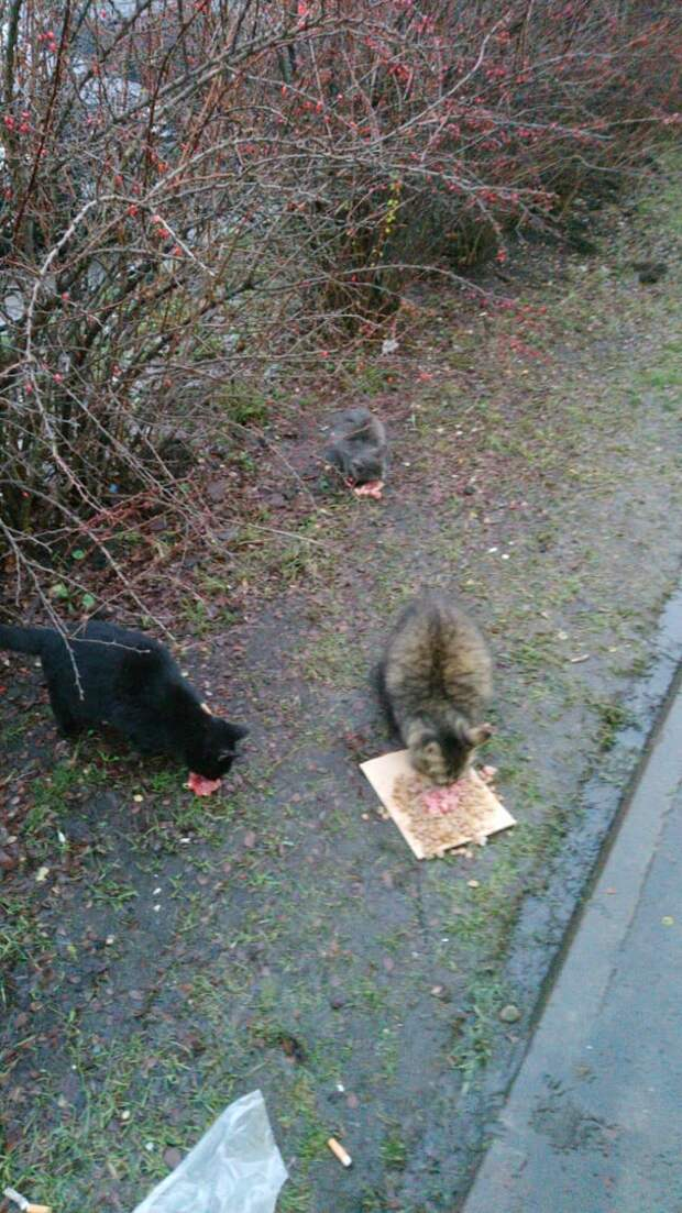 К дверям магазина кошка привела маленьких голодных котят. Скоро грянут морозы и, если мы не поможем, они пропадут...