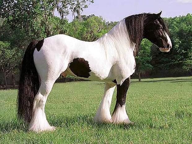 лошади фото и картинки