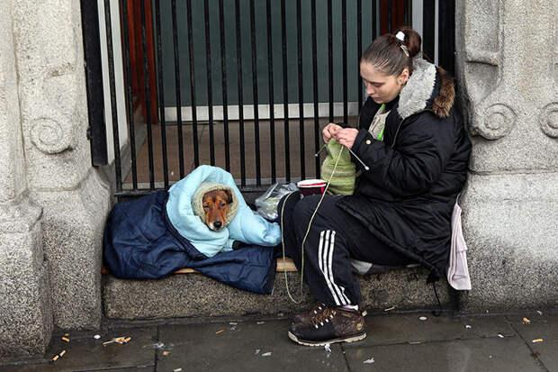 9. Бездомные в Дублине бездомный, любовь, собака