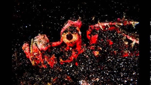 Подводный мир 43 в снимках Алексиса Голдинга, снятые в Индонезии