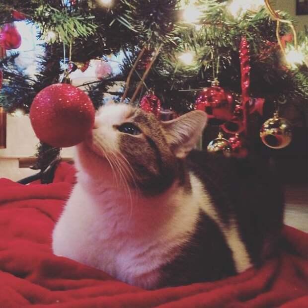 5. Зачем класть под елочку подарки, если есть кошка? елка, кошка, подборка
