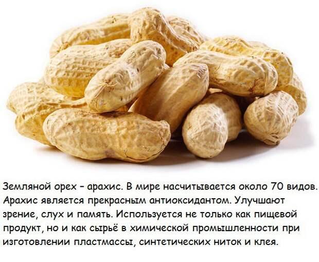 10 самых полезных орехов и их лечебные свойства