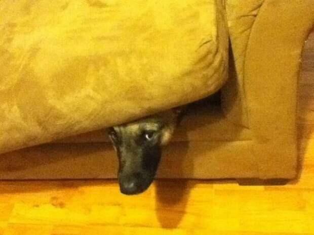 Собачки которые очень хотели спрятаться-6