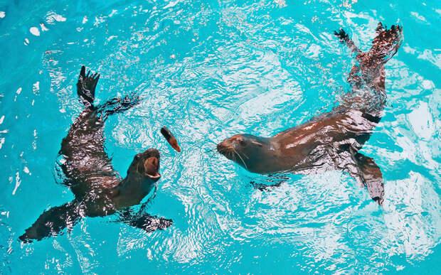 Калифорнийские морские львы