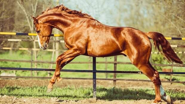 Великолепие лошадей