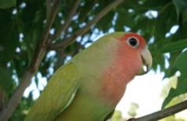 Полиция Нидерландов арестовала попугая