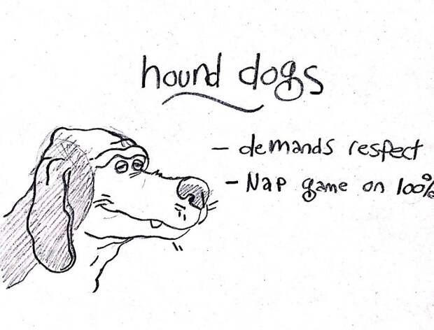 Путеводитель по собакам всех пород. Он поможет вам выбрать 1 из них!