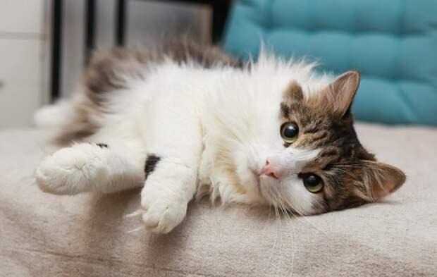 В феврале 2020 года на остановке приставал к прохожим кот. История непростого кота
