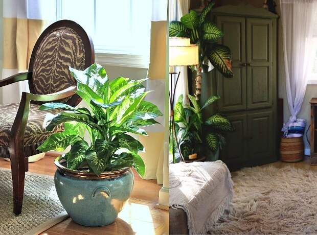Комнатные растения в интерьере квартиры (112 фото)