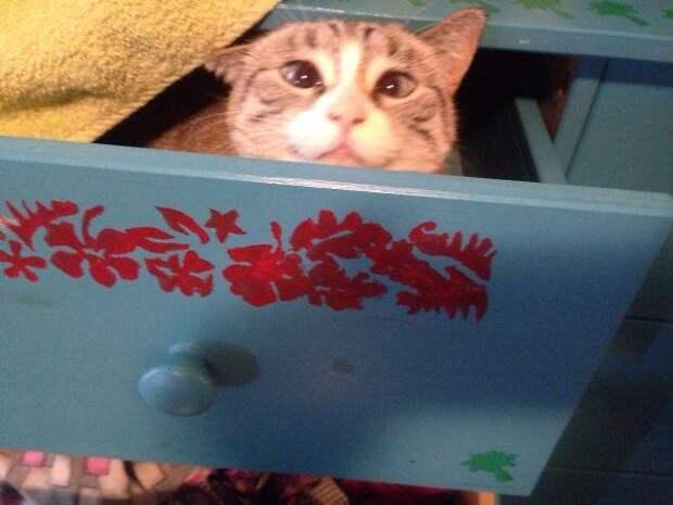 13 наглых котов, которых поймали с поличным на месте преступления
