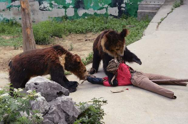 zhivotzaiyun 20 Лучшие фотографии животных со всего мира за неделю