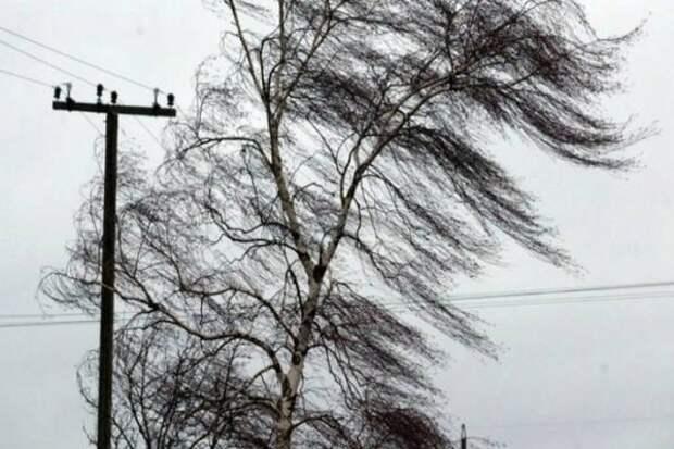 Сильный ветер и снег подпортят сегодня настроение жителям Хабаровского края