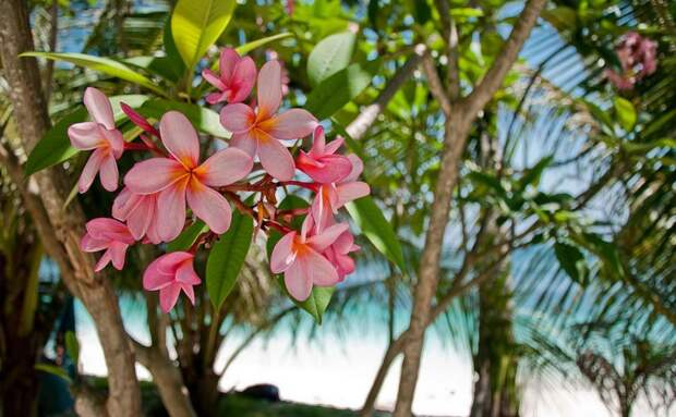 Самые фотогеничные деревья, которые очаруют вас своей красотой деревья, красота, природа
