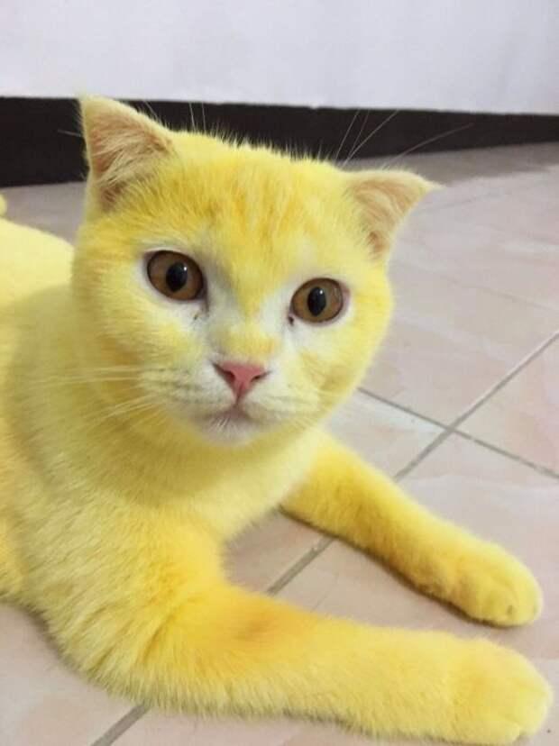 Кот, похоже, даже не подозревает, что с ним что-то не так.