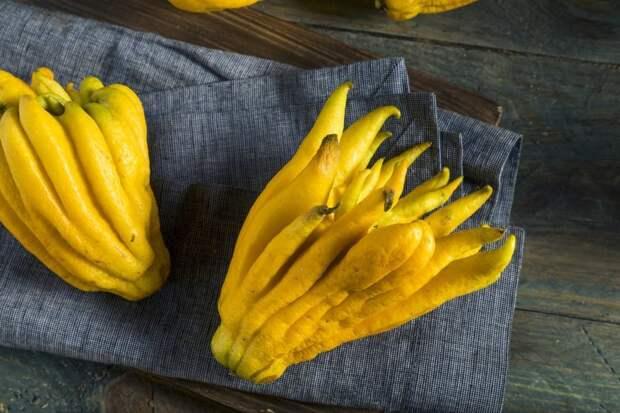 Рука Будды еда, мир, необычный, путешествия, страшный, фрукты