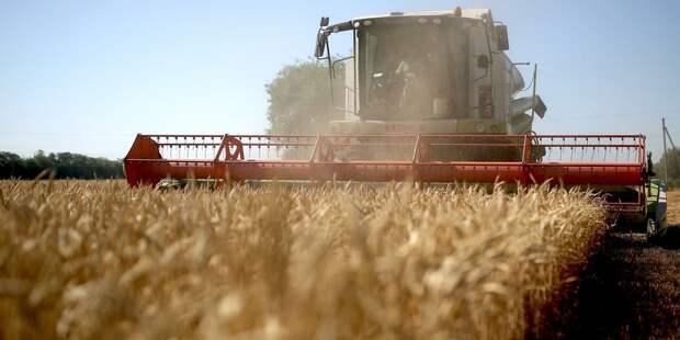 Зерновой союз обратился к Путину