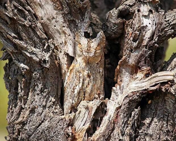 Птички тоже ничего животные, интересное, красота, мимикрия, природа, спрятались
