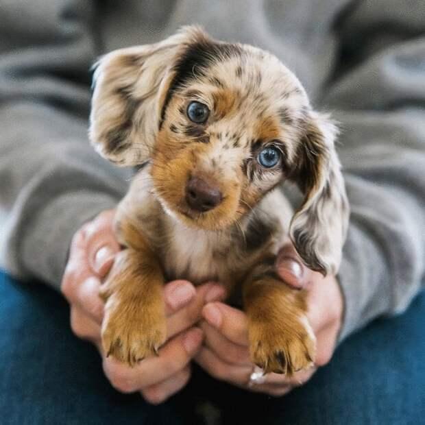 Милые щенки, вызывающие у любого улыбку и умиление