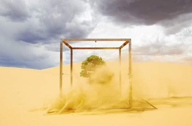 Десятилетнее кругосветное путешествие дерева-бонсай