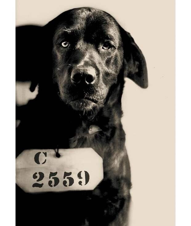 Как пёс по кличке Пеп был приговорен к пожизненному заключению