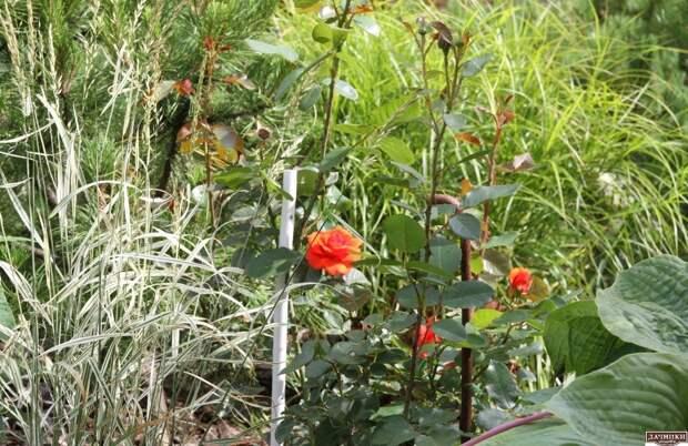 Красивый сад Татьяны Кретовой
