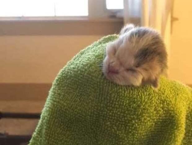 Мать-кошка закопала слабого котенка в грязи, но люди нашли его и выходили