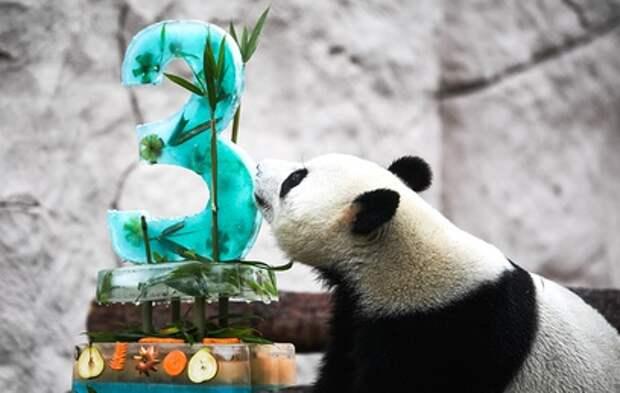 Московский зоопарк получил три награды панда-премии