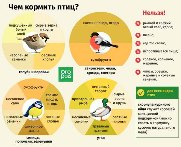 чем можно и нельзя кормить птиц зимой