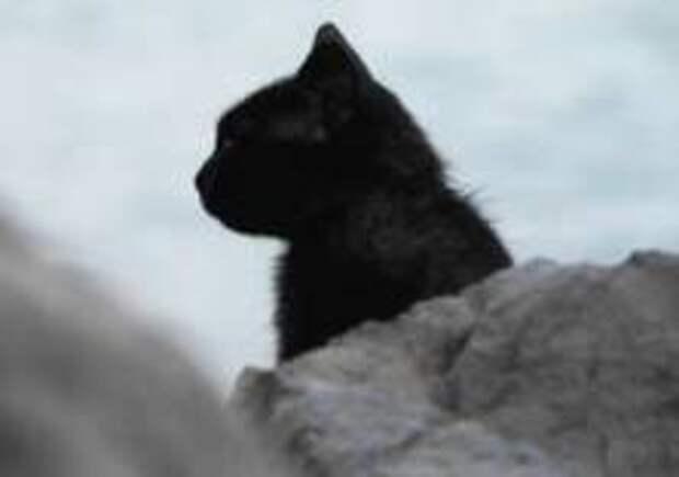 Британец скончался из-за укуса кошки