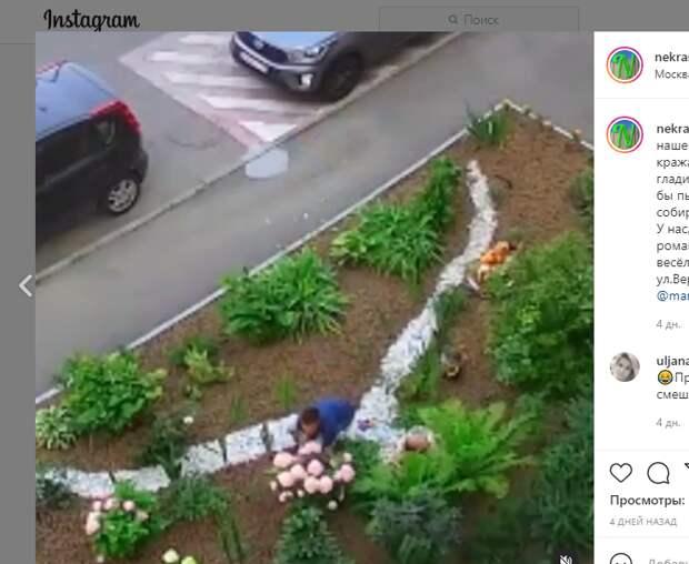 Мужчина украл цветы для возлюбленной из палисадника на Вертолетчиков