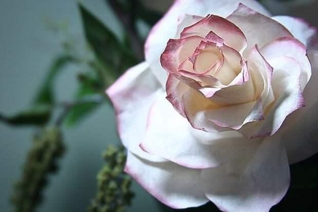 МАСТЕРИЛКА. Делаем розы из кофейных фильтров