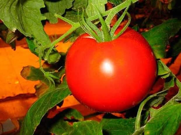 Болезни томатов...