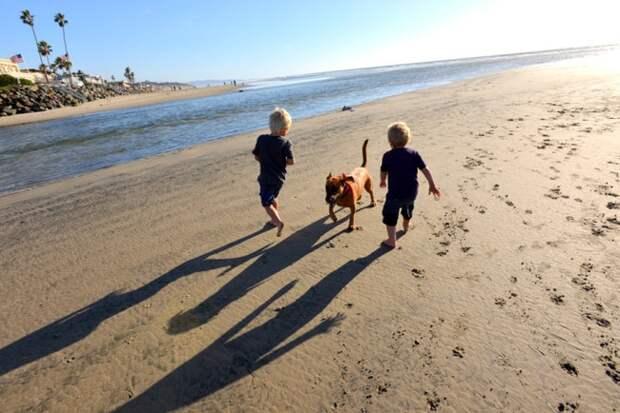 5. Активный образ жизни дети, домашние животные, собака, собаки