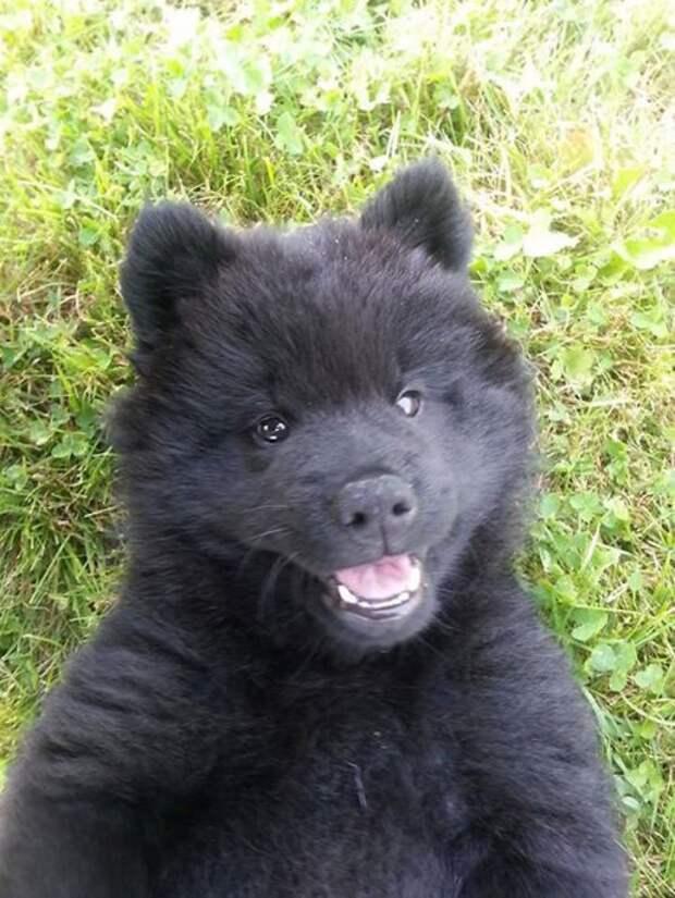 То ли щенок, то ли плюшевый мишка То ли щенок, плюшевые медвежата, то ли плюшевый мишка, щенки