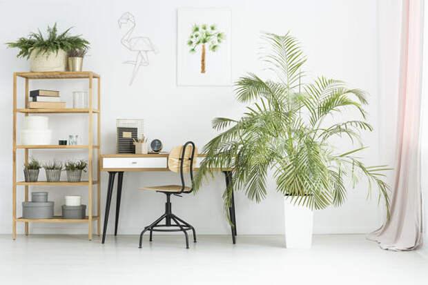 Финиковая пальма смотрится очень экзотично