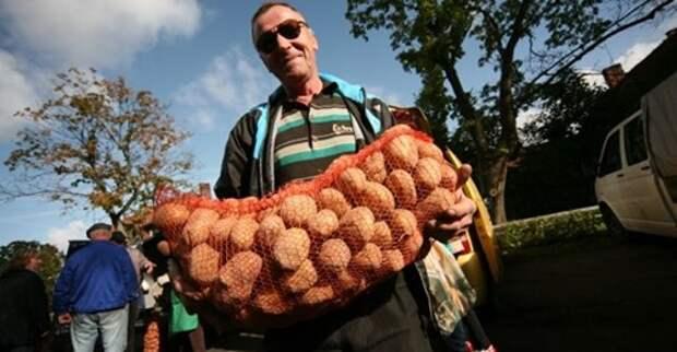 Как правильно хранить урожай картофеля?