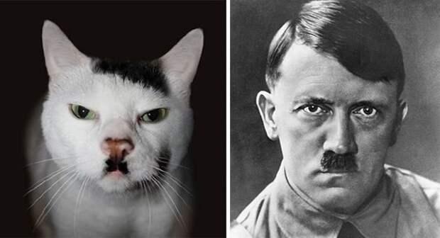 Мистер Китлер животные, копии, юмор