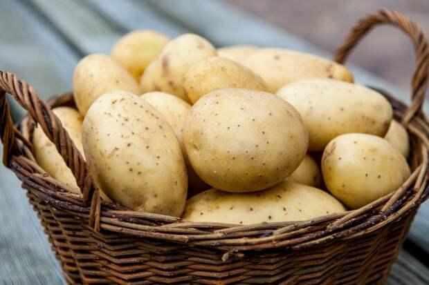 Человеческий ген ожирения перенесли в картофель. Что получилось?