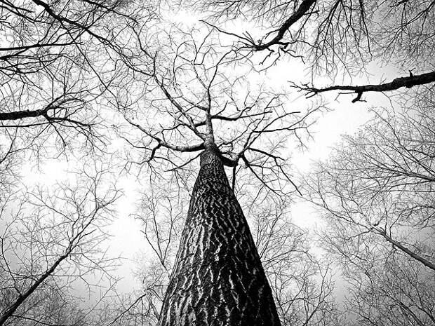 Висевшая на дереве в Лианозове пара обуви не давала покоя местному жителю