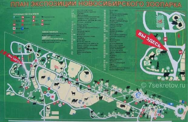 Новосибирский зоопарк Чудеса России, природа, сооружения