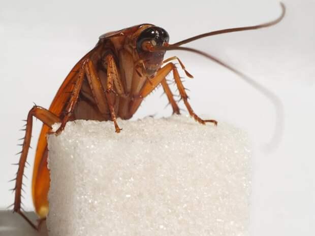 Таракан. выживание, животные, наука