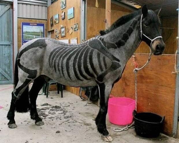 Крутая стрижка для лошади