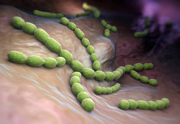 Состав микробиоты лёгких может быть связан с тяжестью протекания COVID-19