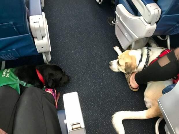 11. Постоянно болтают с друзьями животные, пассажир, салон, самолет, собака, фотография